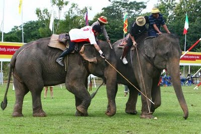 Nepal Fashion Bloggers on Of The Moment  Elephant Polo  Nepal Just Won The Championships